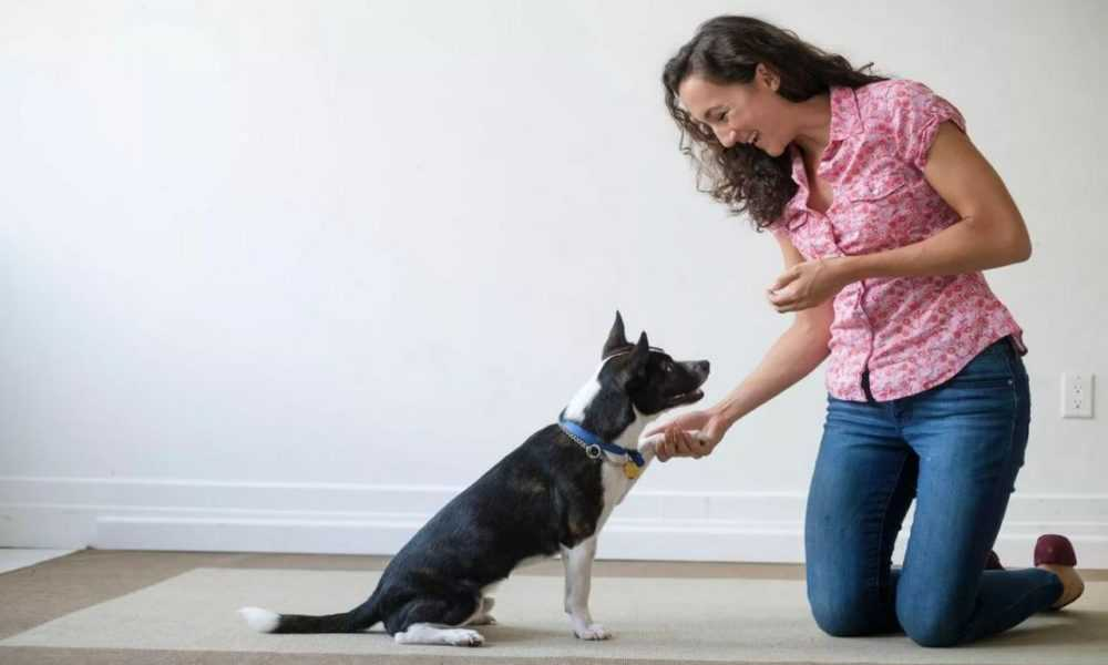 A woman standing next to a dog